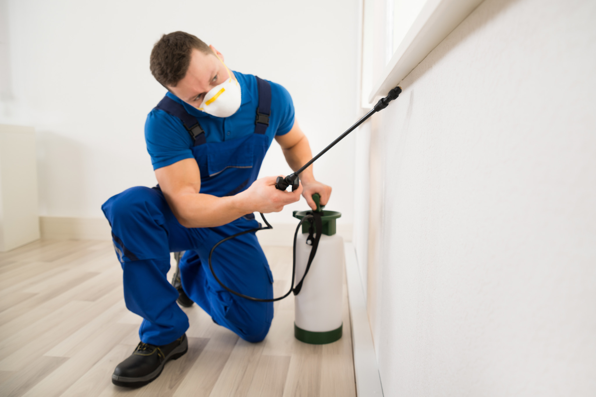 Eco Friendly Pest Control, Davie, FL | Eco Friendly Pest Control Services
