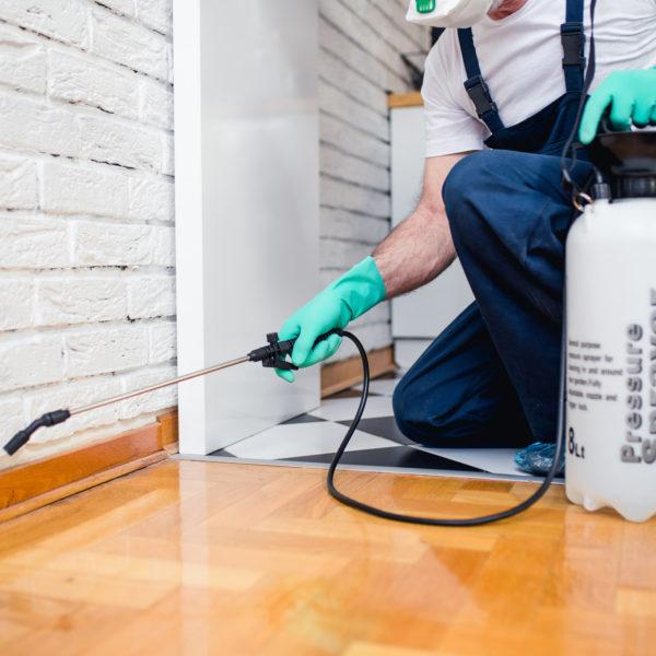 Home Pest Control Company Davie