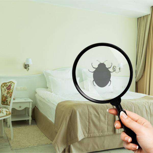 Residential Bug Control Davie