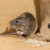 Keep Annoying Rodents Away With These Helpful Tips!