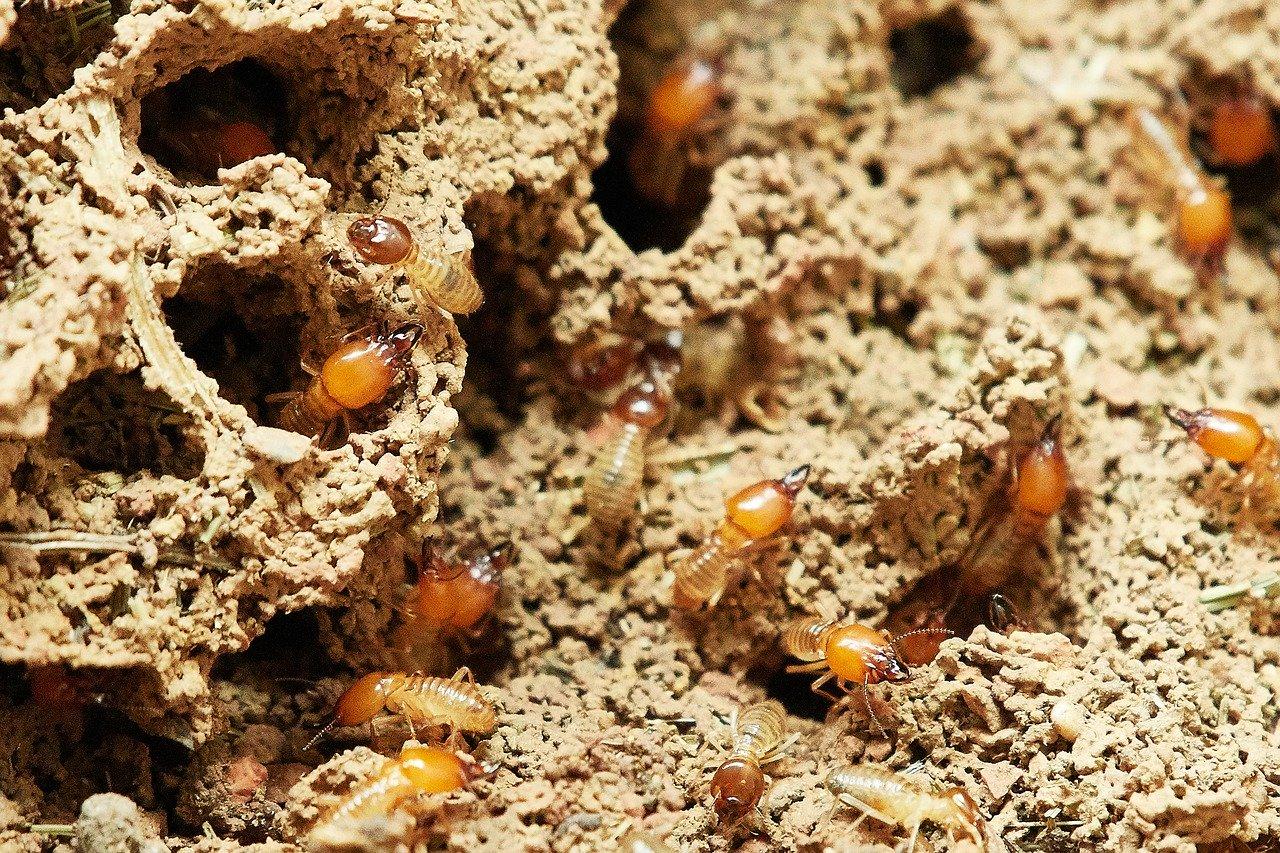 Pest Control | Pest Exterminator | Pest Removal
