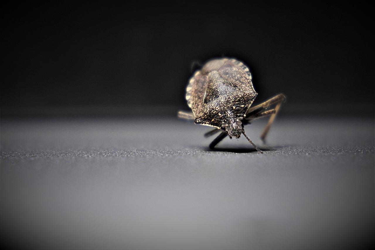 Pest Control Cape Coral, FL | Pest Management | Pest Removal