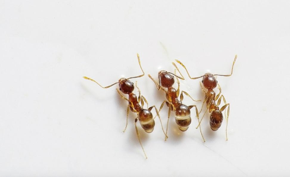Pest Control Cape Coral | Ant Infestation | Termite Treatment