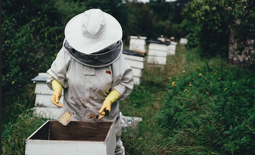 Honey Bee Removal | Pest Control