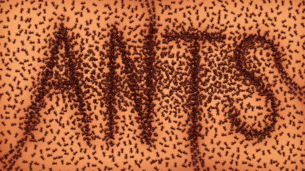Pest Control | Pest Exterminator | Ant Removal