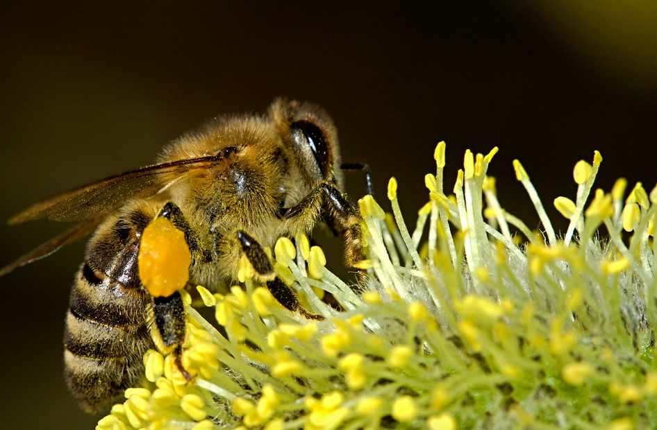 Honey Bee Removal Cape Coral | Honey Bee Infestation
