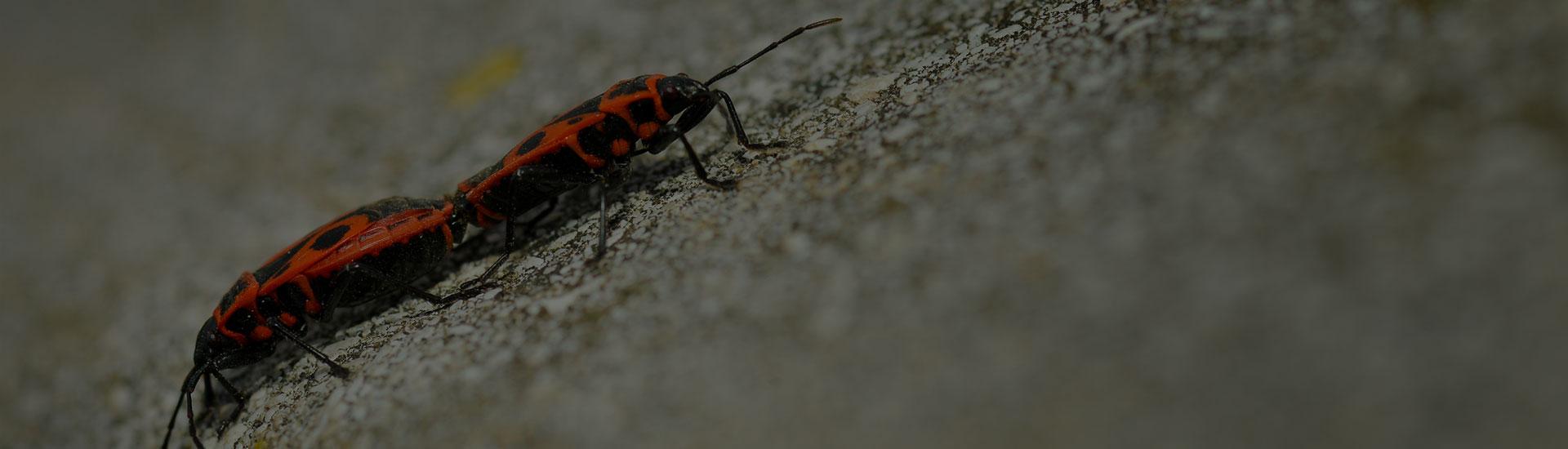 Environmentally Friendly Pest Control Davie